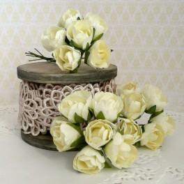 Pąki róż kremowe