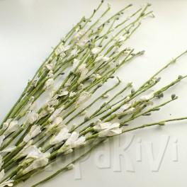 Gałązka kwiatowa biała